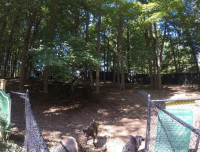 Sycamore Dog Park